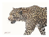 Passing Leopard Fine Art Print