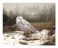 Snowy Mist Fine Art Print