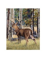 Fall Whitetail Fine Art Print