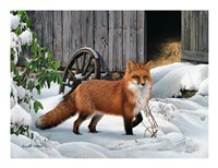 Fox and Barn Fine Art Print