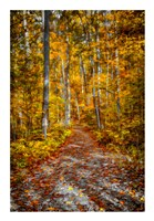 Ohiopyle Path Fine Art Print
