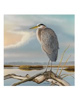 Marsh Watch - Great Blue Heron Fine Art Print