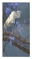 Egret in Wisteria Fine Art Print