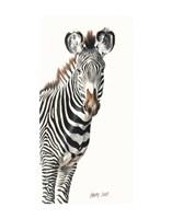 Grevvy's Zebra Fine Art Print