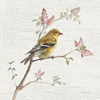 Female Goldfinch Vintage Fine Art Print