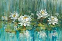 Water Lily Pond Fine Art Print