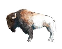 Colorful Bison Dark Brown Fine Art Print