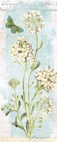 Botany Blue II Fine Art Print
