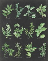 Herb Chart on Black Fine Art Print