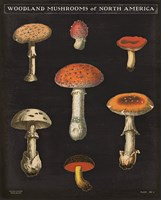 Mushroom Chart III Framed Print