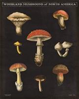 Mushroom Chart II Fine Art Print