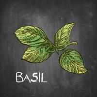 Basil on Chalkboard Fine Art Print