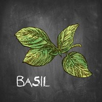 Basil on Chalkboard Fine Art Print