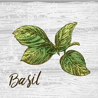 Basil on Wood Fine Art Print