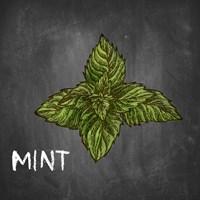Mint on Chalkboard Fine Art Print