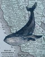 California's Grayback Whale Fine Art Print