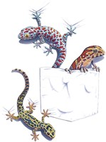 Three Lizards Fine Art Print