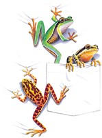 Three Frogs Fine Art Print
