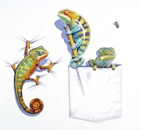 Three Chameleons Fine Art Print