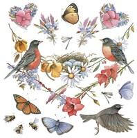 Robins Fine Art Print