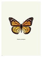 Yellow Butterfly Fine Art Print