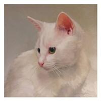 White Kitten Fine Art Print
