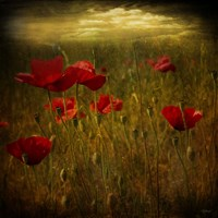 Fields of Red I Fine Art Print