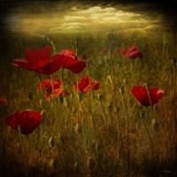 Fields of Red I Fine Art Print