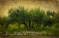 Natures Menage a Trois Fine Art Print