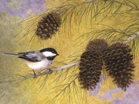 Chickadee in the Pines I Fine Art Print