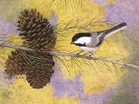 Chickadee in the Pines II Fine Art Print