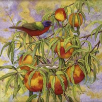 Painted Bunting & Peaches Framed Print