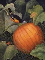 Oriole & Pumpkin Fine Art Print