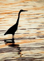 Silhouette of Great Blue Heron in Water at Sunset Fine Art Print