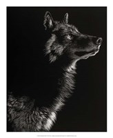 Scratchboard Wolf II Fine Art Print