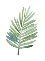 Untethered Palm V Framed Print
