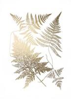 Gold Foil Ferns III Framed Print