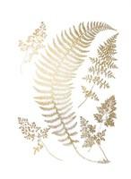Gold Foil Ferns IV Framed Print