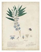 Delicate Blue Descubes I Fine Art Print