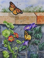 Monarchs, Nasturtiums and Morning Glories Fine Art Print