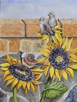 House Sparows with Sunflowers Fine Art Print