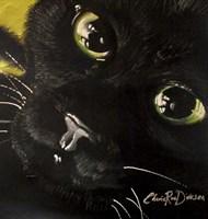 Cat's Eyes Fine Art Print