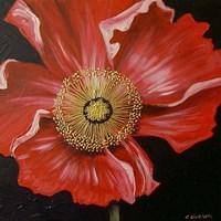 Red Poppy Fine Art Print