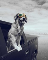 Pop of Color Cool Dog Fine Art Print
