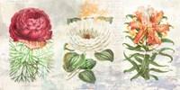 Hortus Botanicus 2.0 Fine Art Print