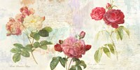 Redoute's Roses 2.0 Fine Art Print