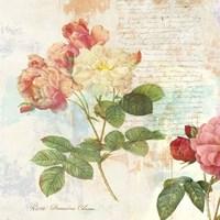 Redoute's Roses 2.0 I Fine Art Print