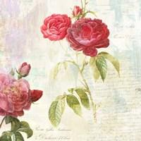 Redoute's Roses 2.0 II Fine Art Print