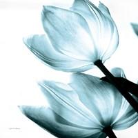 Translucent Tulips II Sq Aqua Fine Art Print