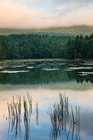 Fog obscures the summit of Mt Monadnock, New Hampshire Fine Art Print